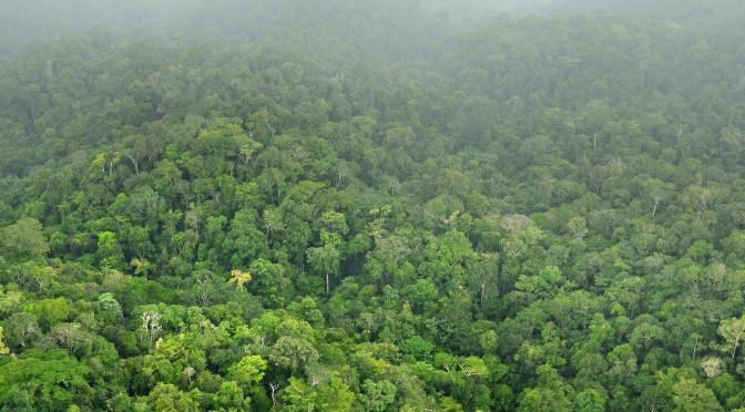 Regenwoud Suriname